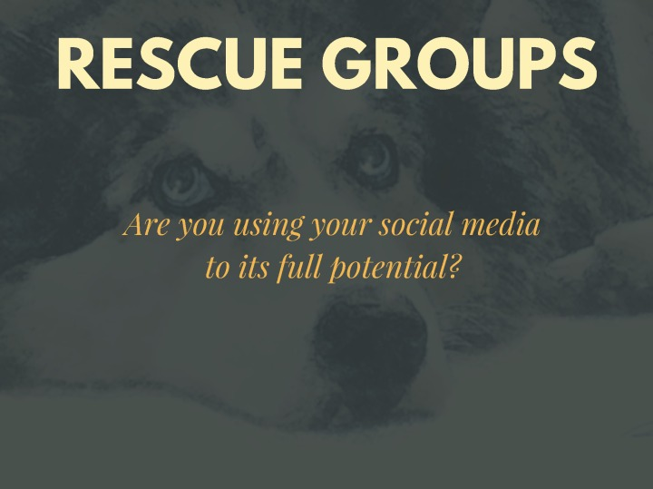 social-for-rescue-groups1_page_1